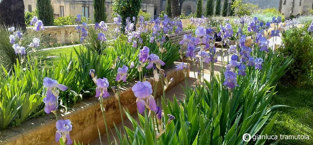 gianluca tramutola paesaggista iris