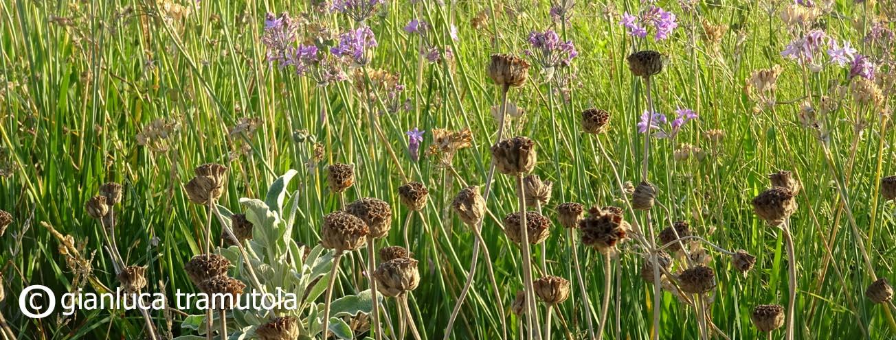 piante parco mura urbiche lecce