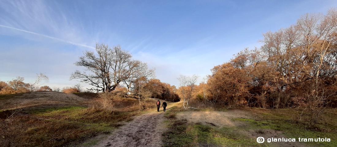 dutch landscape paesaggio olandese