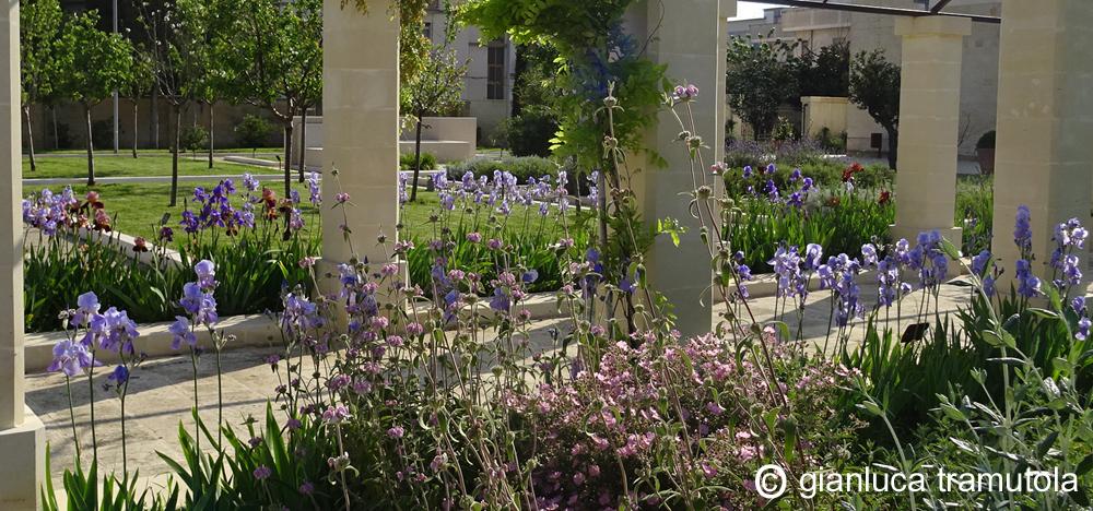 planting design schemi di piantagione