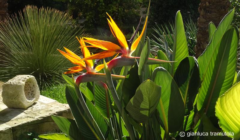 giardino Giaconia Lecce Gianluca Tramutola