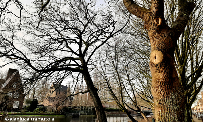arboricoltura urbana gianluca tramutola